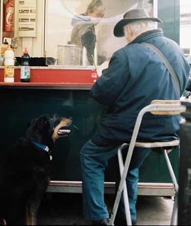 Az éppen evő gazdájára várakozva tekintő, ételt kunyeráló kutya